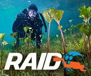 RAID dykare vid botten